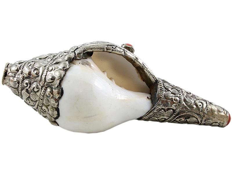 Muschelhorn Dung-Dkar 15 cm